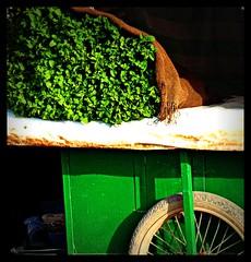 Mint Green, Tiznit, Morocco (ronramstew) Tags: green market mint morocco maroc souk 1001nights marruecos barrow marokko 2011 lemaroc 2010s platinumpeaceaward 1001nightsmagiccity mygearandme mygearandmepremium mygearandmebronze mygearandmesilver blinkagain musictomyeyeslevel1 tiiznit
