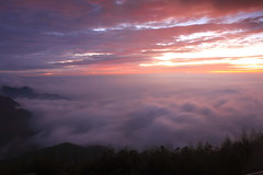 @/The sea of clouds in Alishan Mt. (michaelrpf) Tags: travel mountain landscape tour taiwan resort   alishan seaofclouds    chiayialishan