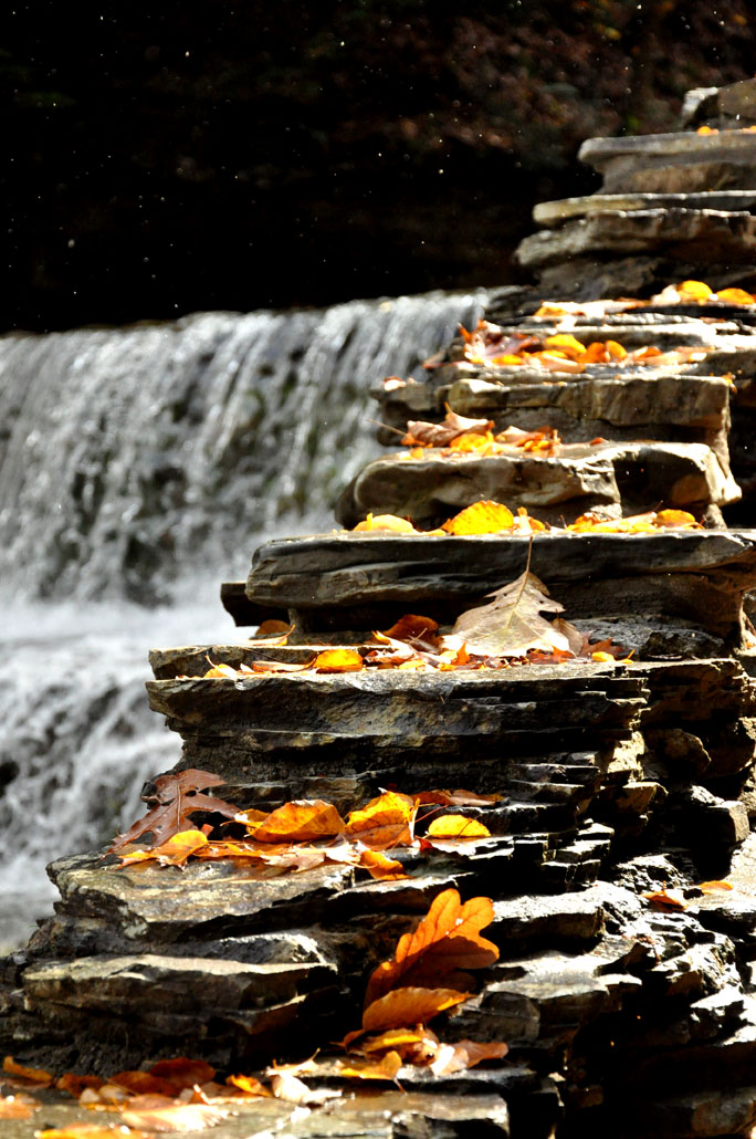 fall walk53