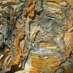 (B*i*B) Tags: abstract texture bark