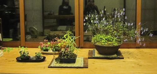 鉢植えの花 2011年10月10日 by Poran111