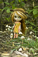 Looking for fairies