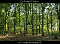 Enchanted (Paul Simpson Photography) Tags: uk trees england leaves forest woodland forestfloor naturalworld treestump naturephotography greentrees naturephotos naturecolors normanbypark naturecolours october2011 paulsimpsonphotography phototsoftrees