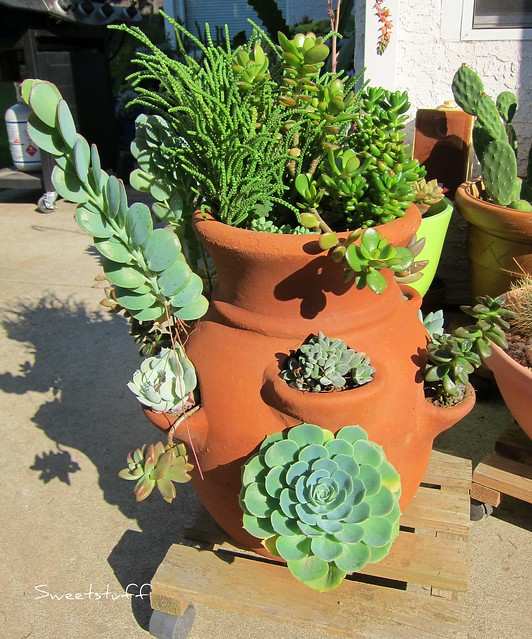 Succulent flower pot view 3