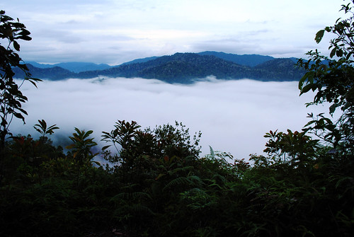 Monday Mist