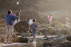 Coast Trip 2011 — 271 (ntisocl) Tags: vacation people seaweed beach water kids oregon starfish roadtrip pacificocean oregoncoast lowtide cannonbeach haystackrock tidepools seaanemone 2011 canonef70200f28lisusm canon1dmarkiii