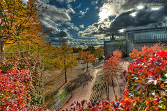 Autumn has come (mlphoto) Tags: autumn sky sun sunlight colors leaves clouds pentax herbst cologne himmel wolken sigma kln 8mm sonne bltter hdr farben sonnenlicht k20d pentaxk20d mlphoto sigma816 mlphoto markuslandsmannzenfoliocom