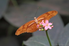 Schmetterling 13 (hellboy2503) Tags: orange flower nature canon butterfly germany top natur butterflies photographers blumen images 100mm gelb 7d getty blau falter makro bltter gettyimages jrg schmetterling nektar gettyimagescallforartists gettyimagesartistpicks hellboy2503
