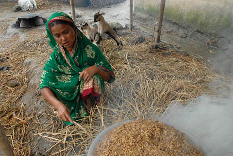 Processing grain, Bangladesh. Photo by WorldFish, 2006