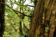 Pleurozia acinosa (KEMP) Tags: leica hasselblad adobe 35 lightroom dmr r9 leicar9dmr flexcolor