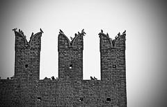(Lollo [neon]) Tags: blackandwhite bw white black nikon torre bn uccelli castello bianco nero animali biancoenero castelli merli medioevo antichit mattoni castellarquato volatili vignettatura d80 taccole naturallyartificial neroamet allphotoswanted nikonclubit