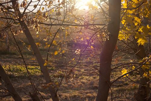 Wonderful light  DSC_8589 by andrey.salikov