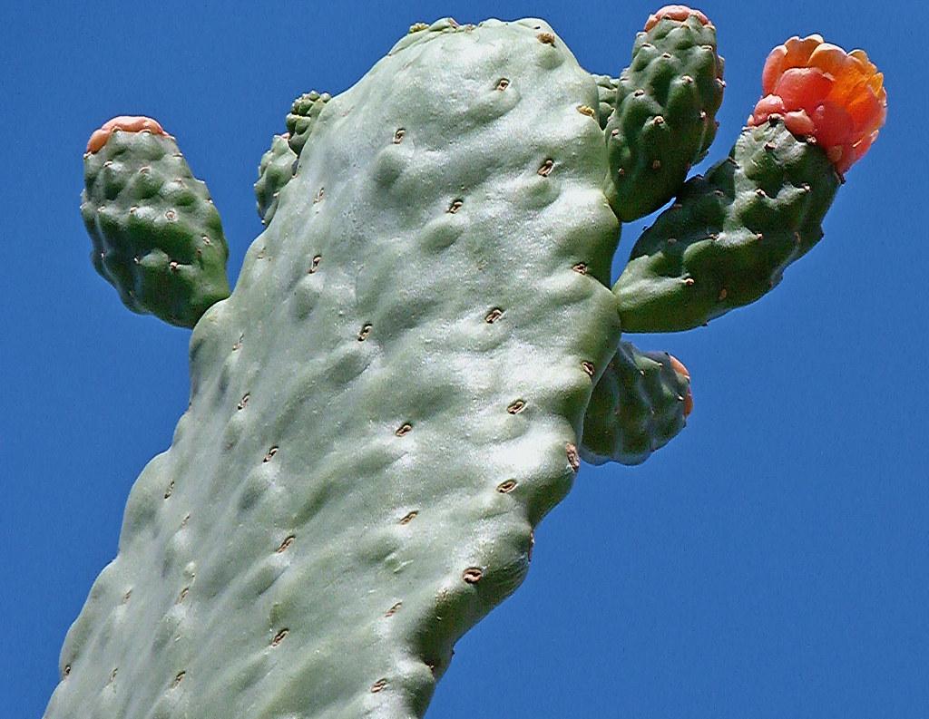29-10-2011-cactus-flower