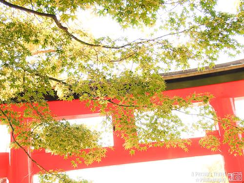 2011Kyoto_Japan_ChapThree_2