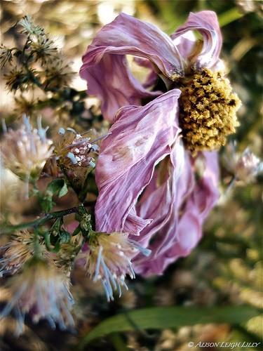 Antiqued Wildflower