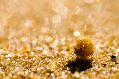 (danielle kiemel) Tags: light macro beach closeup landscape outdoors sand nikon photographer dof bokeh australia nsw newsouthwales centralcoast wamberal 105mmf28 sandmacro daniellekiemel wamberalbeach