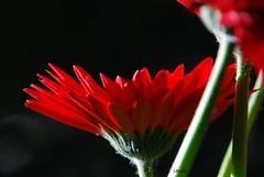 Love (LauFlowers) Tags: life flower love nature nophotoshop