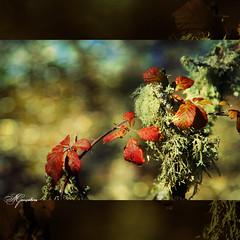 Silvas (Transmontano) Tags: textura portugal photoshop texturas bragança idream xoox theunforgettablepictures transmontano ilustrarportugal spiritofphotography portugalmagico