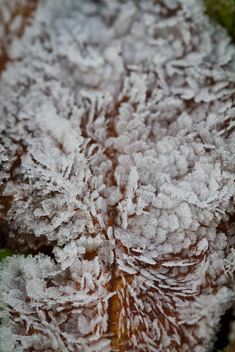 Frost blad