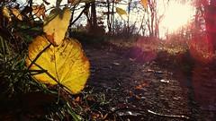 11.11.11 the leaf (martina★linnea) Tags: göteborg 111111 botan botaniskaträdgården 2011