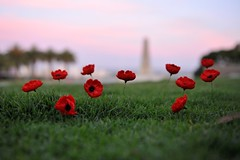 11 Poppies for Remembrance Day (Wish_Art) Tags: flowers red flower green beautiful loss 510fav wonderful point moving nice memorial war soft different view respect emotion superb bokeh pov vet lovely1 great memories honor australia 11 perth memory poppies stunning greatshot ww1 remembranceday lovely cenotaph remembrance fabulous kingspark warmemorial greatwar sorrow westernaustralia defence worldwar touching allrightsreserved veterans anzac sacrifice worldwar1 subtle veteransday armisticeday armistice honour lestweforget anzacs 111111 poignant profound wishart redpoppies 11november abigfave flickrdiamond mikewishart winnr veteransdayusa copyright2011 11november2011 11poppies profoundlymoving