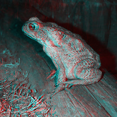 BW Cane Toad 3D Anaglyph (Color 3D Photo) Tags: blue red color colour eye set puppy print poster photography glasses photo stereoscopic 3d high eyes puppies cross kylie image pair side large cyan deep twin anaglyph pop full stereo illusion photograph definition pairs resolution colored format eyed lollipop mole parallel coloured lolli depth moll crossed gobbles gobblez lollimoll lollimole