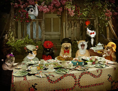 Mad Catter Tea Party (Revd) - enter Miss Poppy! (story below) (martisimas) Tags: flowers party food cats texture dusty table dessert oscar tea humor hats smudge jazz bowtie kettle cups dresses tophat poppy laugh teapot cart ginge cally tazzy bestofcats