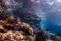 Los Islotes reef (gerb) Tags: blue topv111 coral rock 510fav topv333 surf underwater scuba loveit lapaz seaofcortez tvp aquatica losislotes d7000 sigma1017fe