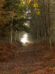 path through the woods (Ashley _Wood) Tags: autumn trees west sussex gate estate footpath pulborough stopham