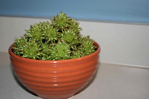 Bowl of….