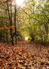 Leafy path (JonTaylor71) Tags: park uk autumn trees brown green fall leaves golden suffolk nikon path fallcolors autumncolours autumnal ipswich fallenleaves christchurchpark d7000 ukparks nikond7000