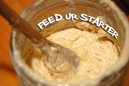feed ur starter