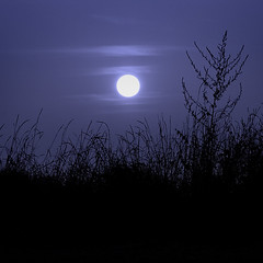 Cold night (G. For._active again) Tags: blue moon grass night clouds artistoftheyearlevel2