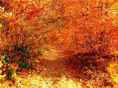 Beautiful Colors of Autumn (Paula ) Tags: autumn fall grass leaves forest woods path autumnleaves autumncolors romania baiamare maramures outstandingromanianphotographers