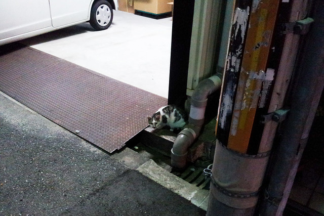 Today's Cat@2011-11-25