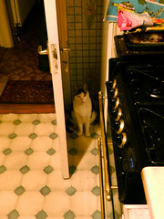 Oimo at the big fridge, hoping to get more treats..