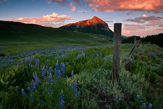 Crested Butte In Bloom (Mike Berenson - Colorado Captures) Tags: flowers sunset clouds fence colorado glow bloom wildflowers lupine allrightsreserved crestedbutte alpenglow mountcrestedbutte washingtongulch coloradocaptures copyright2011bymikeberenson
