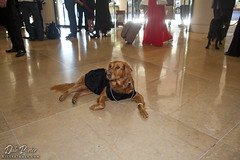 Hero Dog Awards 2011 - Ricochet at Beverly Hilton Hotel