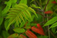 EC Row Alleyway (eros519) Tags: plant green nature leaf nikon reg d7000