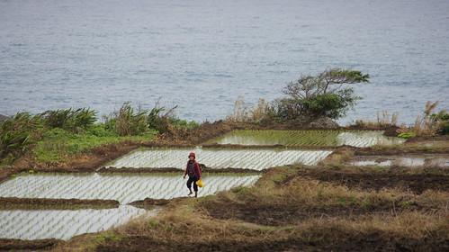 石梯坪瀕臨太平洋岸邊的水梯田正在逐漸成長。(圖片來源:林務局)