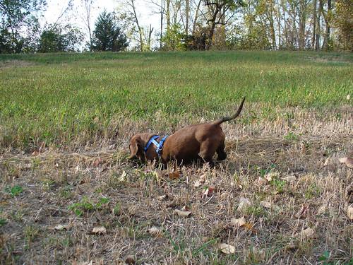 2011-10-09 - Ralphie's (pre-) Birthday Dig - 0001