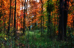 Autumn Woods (365-283) (David Guidas) Tags: autumn painterly color fall nature woods seasons pentax 365 impressionistic icm project365 k20d intentionalcameramovement da1770 2011inphotos