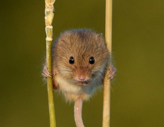 cute animal (1)