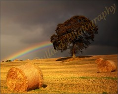 A Golden silence after the Storm. (Edward Dullard Photography. Kilkenny, Ireland.) Tags: autumn ireland irish painterly tree verde green fall nature automne rainbow herbst eire impressionism photoart emeraldisle irlanda haybales ierland carlow autunna otone edwarddullardphotographykilkennyireland flickrstruereflection1