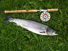 New Hardy Demon 12' D/H (thomvb) Tags: fishing salmon stinchar knockdolian