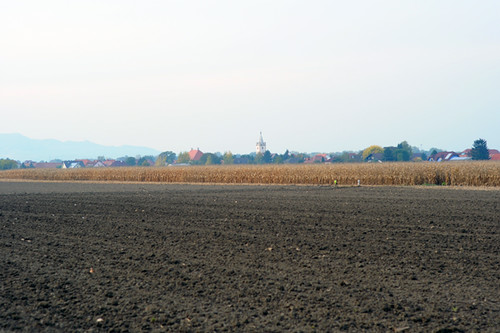 Fields, Road to Traismauer