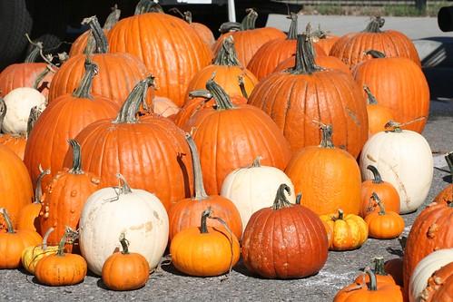 Day 295 - Pumpkins