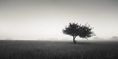 Bretagne morning (.Rohan) Tags: bw mist tree field mood 21 bretagne splittone