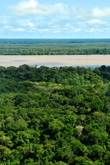 Amazon Rainforest (CIFOR) Tags: brazil forest river amazon rainforest flickr view forestry center aerial spanish international research redd forests verticals cifor