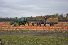 PUBLISHED IN THE MANITOBA CO-OPERATOR (Jeannette Greaves) Tags: october pumpkins 2011 portagelaprairie mayfairfarms mhb jspubpic manitobacooperator